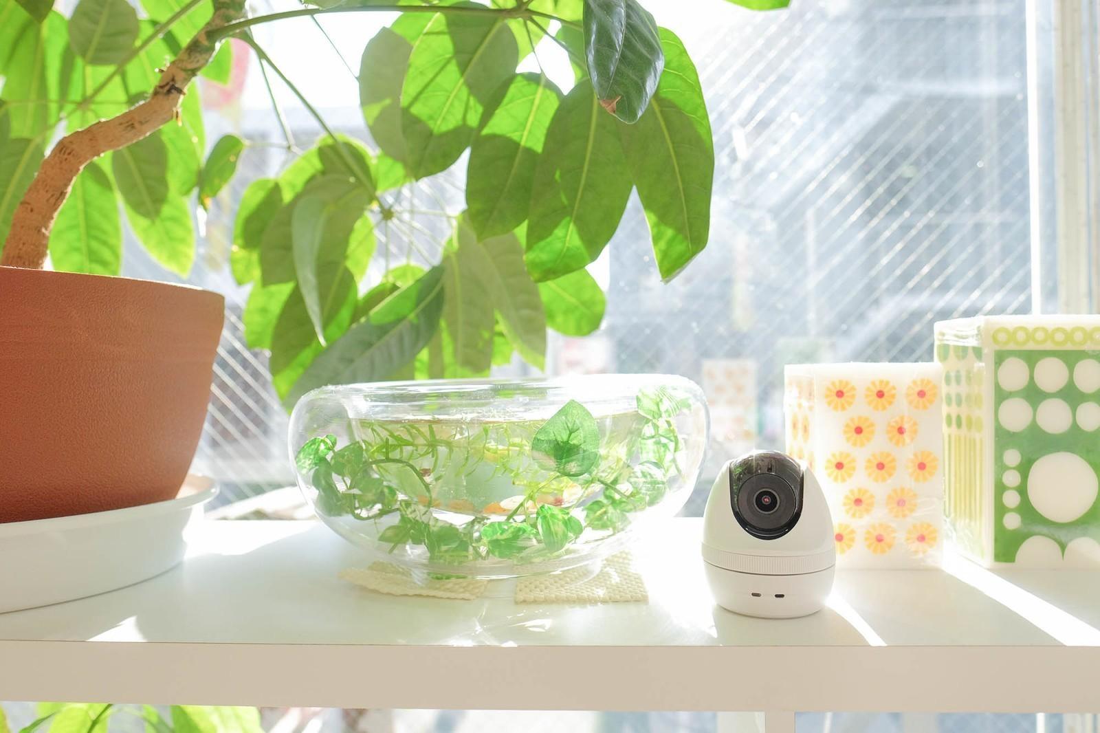 【Android】スマホと監視カメラを活用、クラウド型セキュリティーサービス「Safie」のアプリエンジニアを募集!