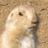 JavaScript - OAuth 認証 - Firefox OS アプリプログラミング - Qiita [キータ]