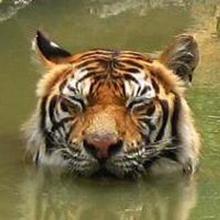 tiger4th (tiger4th) · GitHub